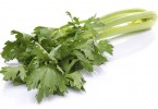 Fresh green celery, isolated on white
