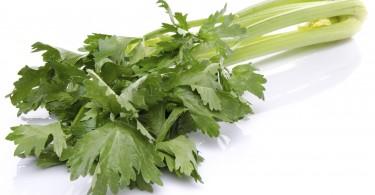 Fresh green celery, isolated on white